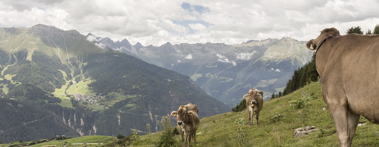 standing_on_a_mountain_top_1440x560pxvs2